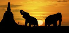 Silhouette of pagoda and elephants by Sasin Tipchai on 500px