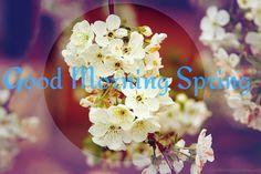 Good Morning Spring Pic