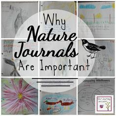 We have been using nature journals in our homeschool for many years.  They have helped my children with writing, art, noticing nature detail and much more.