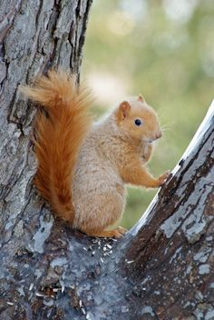 ♥Blondie posing for her first photo shoot.  Truely the hit of Squirrel City.......