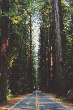 (2) Nature Posts (@BestNaturePosts) | Twitter