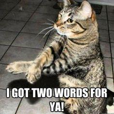 DX's cat! #WWE