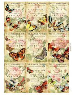 Butterfly Metamorphosis Digital Collage Sheet by GalleryCat