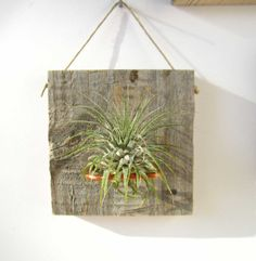 Set of Three SMALL FORM Air Plant and Barn Wood Grab by NiaCraft