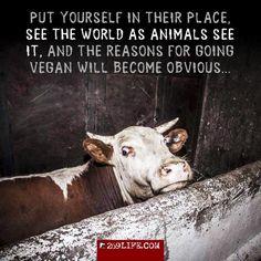 Go vegan for the animals! #vegan #animalrights