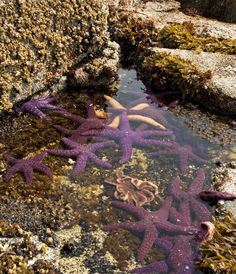 Tide pools in the pacific northwest US i so hope to explore some of these on my trip!