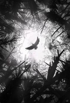Looking forward to ? This crow by Nag.- Looking forward to ? This crow by Nagy Norbert is suitabl… Looking forward to ? This crow by Nagy Norbert is suitably dark :-] - Dark Fantasy Art, Dark Art, Crow Art, Raven Art, 80s Wallpaper, Arte Ninja, Arte Obscura, Dark Photography, Gothic Art
