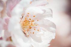 Wonderful Spring Bloom Close Up Free Stock Photo