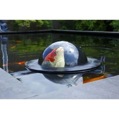floating_fish_dome