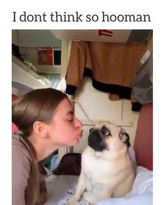 I no kiss hoomans 🤣 - Funny Dog Videos Cute Funny Dogs, Funny Vid, Funny Dog Videos, Funny Animal Memes, Cute Funny Animals, Dog Memes, Funny Animal Pictures, Cute Baby Animals, Funny Photos
