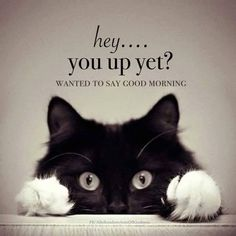 Hey.... you up yet? Omg so cute! So sending this to you some morning lol                                                                                                                                                                                 More