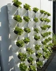 Hydroponic Gardening - Vertical gardens are a great solution that will serve you as a garden decor element. We have rounded up this collection of Vertical Garden Ideas. Hydroponic Gardening, Organic Gardening, Container Gardening, Gardening Hacks, Urban Gardening, Aquaponics Greenhouse, Vertical Hydroponics, Pvc Greenhouse, Pallet Gardening