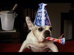 """Happy New Year!"", Festive French Bulldog ; )"
