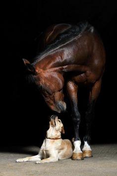 Non vi è nulla così buono per l'interiorità di un uomo come l'esteriorità di un cavallo. John Lubbock