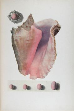 """Kunz, George Frederick and Stevenson, Charles Hugh (1908) - """"The Book of the Pearl"""""""