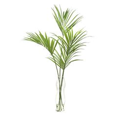 Add tropical charm to your living room or den with this faux kentia palm plant, complete with glass vase.     Product: Faux plant