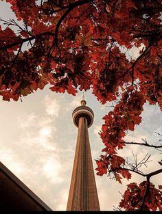 Cn Tower, Canada, Seasons, World, Nature, Travel, Instagram, Daughter, Random