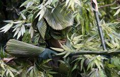 """Animal Kingdom's """"Bamboo"""" tami@goseemickey.com"""