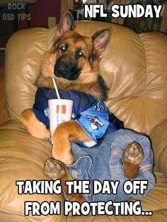 Police Dog watching football