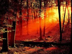 http://pinterest-pics.blogspot.com/    Red forest