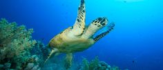 Diving « The Little Cayman Beach Resort