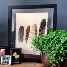New feather artwork sets coming to Homebarn in the next week or so. There will be four distinct styles. #botanical versions coming soon #vintage #homebarn #marlow http://www.homebarnshop.co.uk/product-category/view-all-vintage-reclaimed-furniture-homeware/