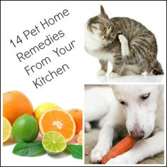 14 pet home remedies from your kitchen
