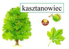 Drzewa, owoce, liście Ania Jóźwina Plansze edukacyjne Pomoce dydaktyczne Polish Language, Autumn Art, Kids Learning, Diy And Crafts, Herbs, Plants, Aster, Animal, Geography