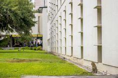 Gatitos también son parte de la fauna.