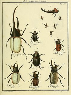 Bichos by BioDivLibrary http://www.flickr.com/photos/biodivlibrary/8112643133/#