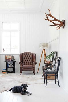 Manly seating area featuring brown leather armchair, tripod lamp, mounted antlers, cowhide rug, and vintage decor. All White Room, Living Room White, White Rooms, Rugs In Living Room, Home And Living, Home And Family, Living Spaces, Leather Living Room Furniture, Brown Furniture