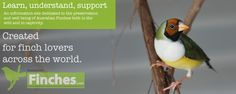 Finch care, Australian finches