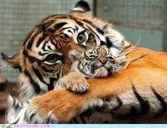 Mom & baby tiger