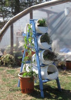 Vertical Bucket Ladder Herb Garden - Think I should do this for strawberries. I could also paint both the ladder and the buckets to be decorative. Maybe even glue on glass beads and mirrors to make .a pretty focal point Bucket Gardening, Container Gardening, Recycling Containers, Magic Garden, Herb Garden Design, Olive Garden, Growing Herbs, Growing Vegetables, Horticulture