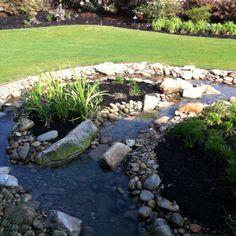 Backyard water feature