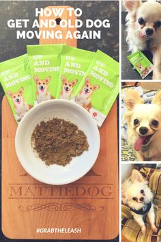 Learn how to get your old dog moving again! By Rebecca Sanchez, The Pet Lifestyle Guru at MattieDog #grabtheleash #ad