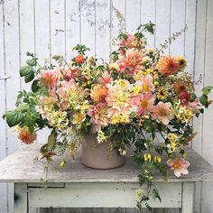 Early September bouquet ingredients include: Dahlia 'Breakout', 'Appleblossom' and 'Irish Pinwheel', Tomato vines, Honeysuckle 'Scentscation', Clematis 'Bill McKenzie', Rudabeckia 'Sahara', Strawflower 'Apricot-Peach', Mockorange foliage and Broomcorn.