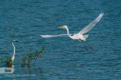 Flying by greentsai. Please Like http://fb.me/go4photos and Follow @go4fotos Thank You. :-)