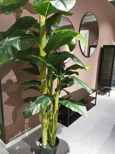 102 forskjellige Jotunfarger My House, Plant Leaves, Hair Beauty, Living Room, Plants, Home Decor, Pintura, Asylum, Decoration Home