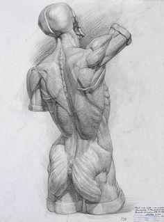 Кафедра анатомического рисунка: Российская академия живописи, ваяния и зодчества Ильи Глазунова Human Anatomy Drawing, Human Figure Drawing, Body Drawing, Life Drawing, Muscle Anatomy, Body Anatomy, Anatomy Art, Drawing Reference Poses, Anatomy Reference