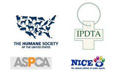 Yorkshire Terrier: Training Tips For Yorkshire Terrier Dog Breeds Maltese Dog Breed, Corgi Dog Breed, Hound Dog Breeds, Dachshund Dog, Chiweenie Puppies, Maltipoo Dog, Dane Puppies, Basset Hound, Yorkies