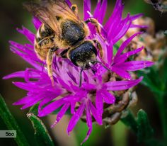 Bee by Jack Benson on 500px