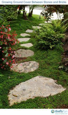 deer resistant herbs in the edible landscape edible landscaping