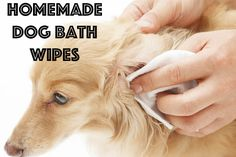 DIY dog bath wipes. Perfect for when your dog needs just a little bit of cleaning. #dogs