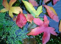 ansichtkaart 08 -herfstbladeren- brechtje duijzer
