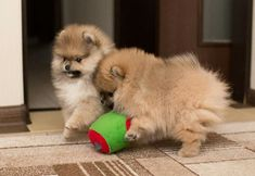 I look forward to the day when I'm going to welcome two Pomeranians into my life and make these 4 walls a home. :)