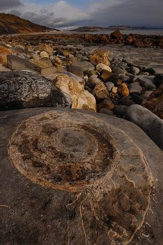 Giant Ammonite, Lyme Regis by blinkingidiot, via Flickr
