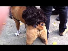 Tompkins Square Halloween Dog Parade doggy nose tail