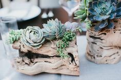 driftwood and succulent centerpieces