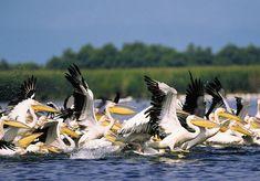 Danube Delta [Romania]